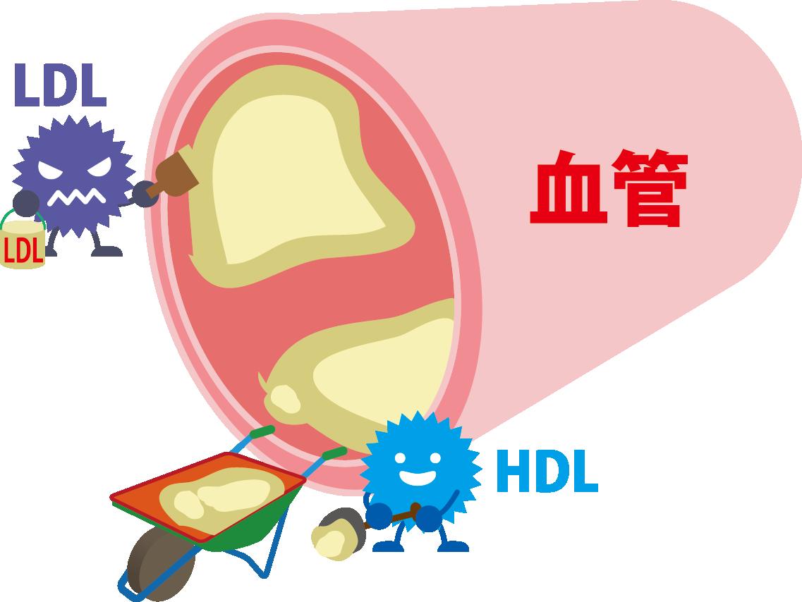 『HDLコレステロール』で何が分かるか知っていますか?