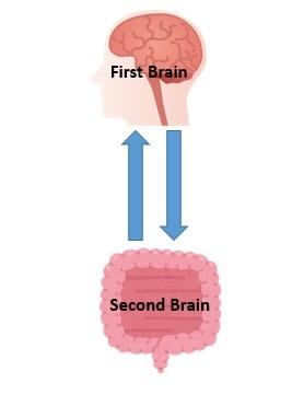 人体の最大の免疫器官~第二の脳~